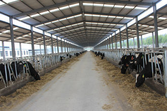 China Automation And Sanitary Pre-made Steel Structural Cowshed Framing Systems supplier